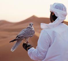 Falconry, Abu Dhabi | Flickr - Photo Sharing!