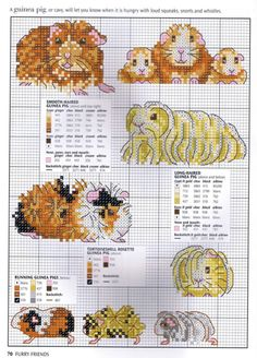 Various pedigree Guinea Pigs - free cross stitch patterns Beaded Cross Stitch, Cross Stitch Charts, Cross Stitch Designs, Cross Stitch Patterns, Pig Crafts, Mouse Crafts, Diy Embroidery, Cross Stitch Embroidery, Embroidery Patterns