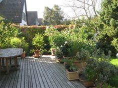 dit un dat sitä sun tätä: September 2010 September, Patio, Sun, Outdoor Decor, Plants, Plant, Planets, Terrace, Solar