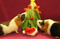 DIY Guinea Pig Christmas Tree - PetDIYs.com