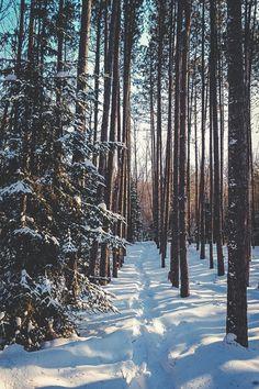 ❄️ Christmas Winter Dreamin ❄️
