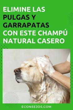 Eliminate fleas and ticks from your pet with a natural and homemade shampoo - Home remedies for fleas – Shampoo - Animals And Pets, Funny Animals, Cute Animals, Yorshire Terrier, Schnauzer, Diy Shampoo, Homemade Shampoo, Mundo Animal, Dog Care