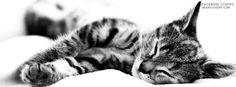 Sleeping Tabby Cat Facebook Covers