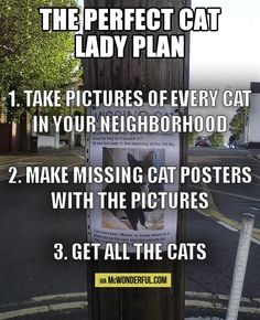 perfect crazy cat lady plan