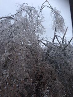 #ice #storm Toronto 2013 Tree on our property