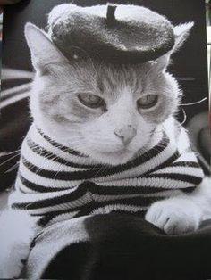 wee wee #cat #paris #dressup
