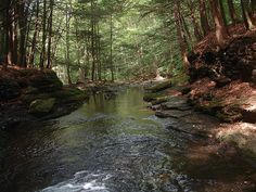Worlds End State Park, Forksville, Pennsylvania by Pennsylvania Sande, via Flickr