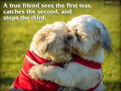 be7281d03d9dfe7ac730c9ef45a7a257.jpg 640×480 pixels ==> visit http://www.amazingdogtales.com/gifts-for-shih-tzu-lovers/ Shih Tzus, Shih Tzu Puppy, Shitzu Puppies, Cute Puppies, Cute Dogs, Dogs And Puppies, Puppys, I Love Dogs, All Dogs