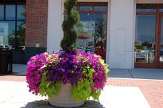 Sweet potato vine and wave petunias. This is what we did last year.  This Pintrest site is kind of addictive...better get back to my chores now! :-)