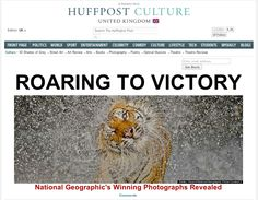 ROARING TO VICTORY - National Geographic's Winning Photographs Revealed - find out more: http://huff.to/ZqiJSk