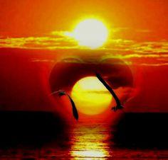 Por do sol com Gaivotas ♥