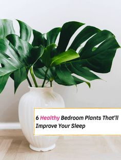 Want to boost the air quality in your bedroom without doing too much? Get a plant! Some plants cleanse the air and eliminate toxins, while others will help you relax and sleep better. You may have plants that add color and life to the rest of your home already but also can dress up a... Read More » The post 6 More Bedroom Plants That'll Help Improve Your Sleep appeared first on Everything Abode. Jasmine Plant, Golden Pothos, Big Leaves, Bedroom Plants, Healthy Sleep, Sleep Better, Gardening Gloves, Ficus, House And Home Magazine