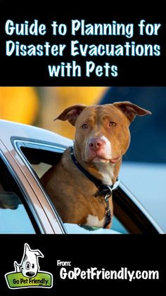 Guide to Preparing for Emergency Evacuation with Pets.