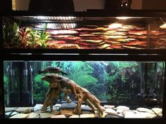Michael Evans uploaded this image to 'Turtle Tank'.  See the album on Photobucket.