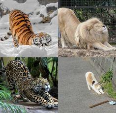 New meme compilation (cat memes,dog memes,pets memes,animal memes) Cute Funny Animals, Cute Baby Animals, Cute Cats, Funny Cats, Animals Kissing, Wild Animals As Pets, I Love Cats, Crazy Cats, Beautiful Cats