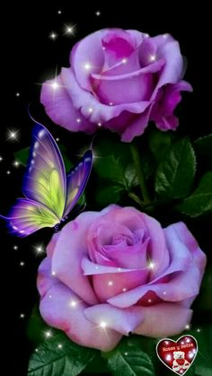 Beautiful Flowers Pictures, Beautiful Flowers Wallpapers, Beautiful Rose Flowers, Beautiful Nature Wallpaper, Happy Flowers, Pretty Wallpapers, Flower Pictures, Purple Flowers Wallpaper, Flower Phone Wallpaper