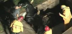 Horse rescued after falling into underground vault
