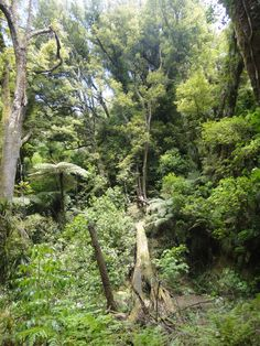 Communing with nature in The Land of the Long White Cloud. Long White Cloud, Tropical Forest, Forests, New Zealand, Night Out, Paradise, Nature, Plants, Summer