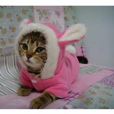 Cute Pet Cat Clothes Easter Bunny Costume Hooded Coat Fleece Warm Rabbit Clothes Outfit for Cats New Cat Costume Cute Kittens, Cats And Kittens, Cats Meowing, Cats Bus, Costume Chat, Pet Costumes, Halloween Costumes For Cats, Pet Dogs, Dog Cat