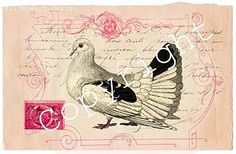 Dove/Pigeon with French letter bkgrd