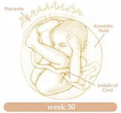 Thirtieth Week of Pregnancy Because you are carrying extra weight and at the same time are unable to sleep well, you might be feeling exhausted. This will go on increasing until the time of deliver.