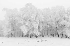 Frederik Buyckx, Belgium (Professional, Landscape)  Whiteout. There is a peculiar transformation of nature when winter comes, when snow and ice start to dominate the landscape and when humans and animals have to deal with the extreme weather. These photos were made in the Balkans, Scandinavia and Central Asia; remote areas where people often live in isolation and in close contact with nature. 2017 Sony World Photography's Shortlist Is Stunning Beyond All Measures