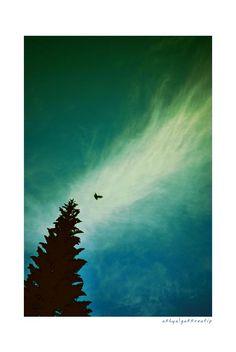 bird over the tree
