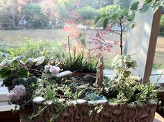 Little Altars Everywhere: Miniature Prayer Gardens « The Mini Garden Guru Yoga Garden, Prayer Garden, Meditation Garden, Miniature Trees, Miniature Fairy Gardens, Garden Show, Dream Garden, Dwarf Shrubs, Home Altar