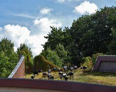 Inspiratie: groendak met kunst. Kunstwerk van Peter Bastiaanssen op het groene dak van Museum de Buitenplaats in Eelde. Het gebouw is van architect Ton Alberts (1927-1999) en de tuin is van tuinarchitect Jørn Copijn