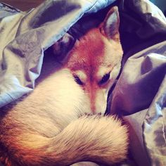Back into the cave 'firefoxing' again Good night, friends