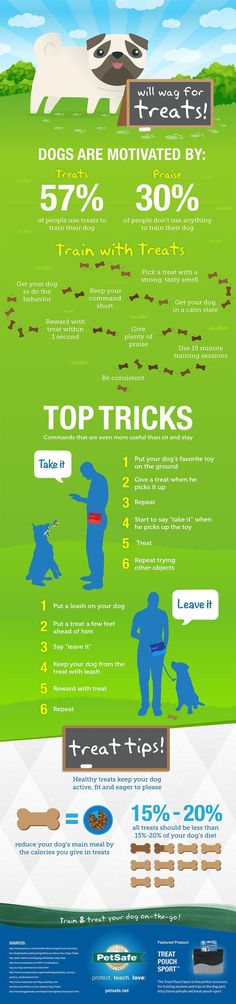 How To Train Your Dog With Treats infographic