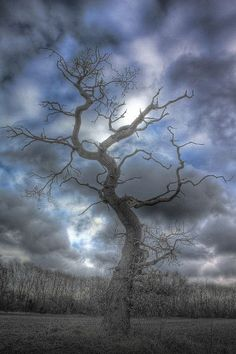 http://www.incredible-pictures.com/2014/03/20-amazing-pictures-of-natures.html Tree Forest, Dead Forest, Beautiful World, Beautiful Places, Beautiful Pictures, Spooky Trees, Haunted Tree, Dark Tree, Tree Photography