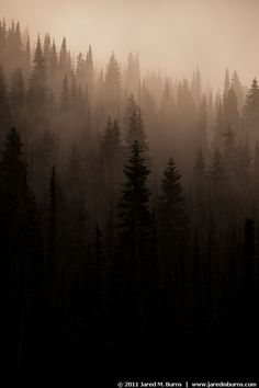 sunrise fog at Mt. Rainier National Park, WA. Some of my best hikes have been in this forest.