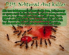 Natural Ant Killer: I used 2 parts Jelly & 1 part Borax.  Ants were completely gone in 2 days.  Worked better than all of the commercial ant killer products I've purchased in past years.