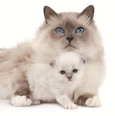 gatos bebe