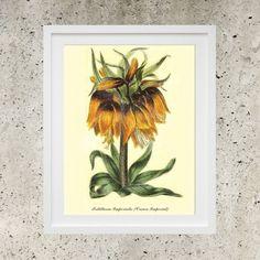 Botanic Garden Flowers  Orange Crown Imperial  by DigitalBanana Crown Imperial