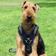 #Exclusive #Leather #Harness for #Airedale #Terrier