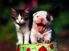 Bilder von Welpen und Kätzchen