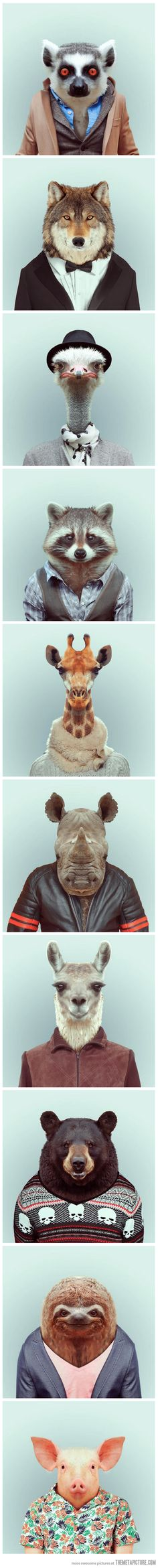 Funny portraits of animals dressed like humans… Maybe I've been watching too much Shameless but I look at the first one and just see Justin Chatwin.