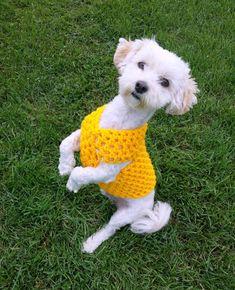 24e1e0d608e9 30 Best Dog Cooling vest images