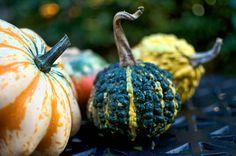 Pumpkins & Squashes