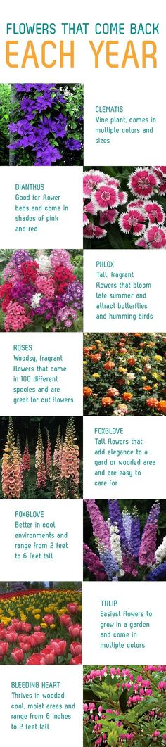 Flowers That Come Back Each Year - consider any of the blooms from this thoughtfully procured list as ideas for perennial garden plants.