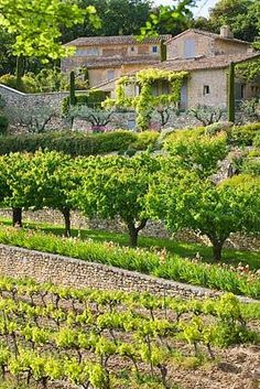 An orchard below the south-facing terrace with a vineyard beyond then the sunflowers/wheatfields, Provence, France La Provence France, Luberon Provence, Belle Villa, In Vino Veritas, French Countryside, French Country House, French Riviera, South Of France, France Travel