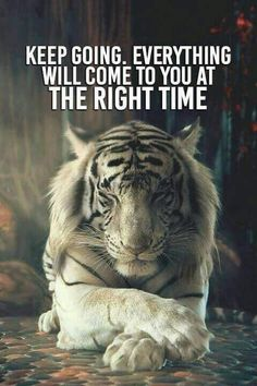 Those with the tiger spirit often have a will power and passion for life that is unrevaled. People with the tiger spirit tend to be confident, loving and wise. Animals And Pets, Cute Animals, Animals Photos, Fierce Animals, Wild Animals, Baby Animals, Photo Animaliere, Belle Photo, Big Cats
