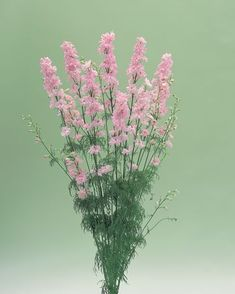Buy Delphinium consolida, Cannes Series Online from Geoseed Delphinium, Cannes, Glass Vase, Peach, Crystals, Plants, Pink, Home Decor, Peaches