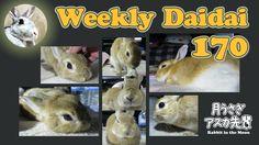 Weekly Daidai 170