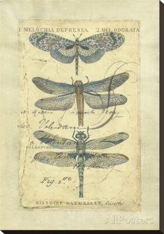 Dragonfly Ephemera-Chariklia Zarris