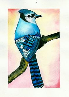 eatsleepdraw:    watercolor blue jayby nicolette cannavale