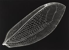 Lente Rasgado: Fossil of light - Kazuyuki Soeno Insect Wings, Insect Art, Natural Structures, Natural Forms, Patterns In Nature, Textures Patterns, Papercut Art, Foto Macro, Motifs Textiles
