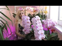 (2) Орхидеи... ВОТ ЭТО ЦВЕТЕНИЕ 😇👍 - YouTube